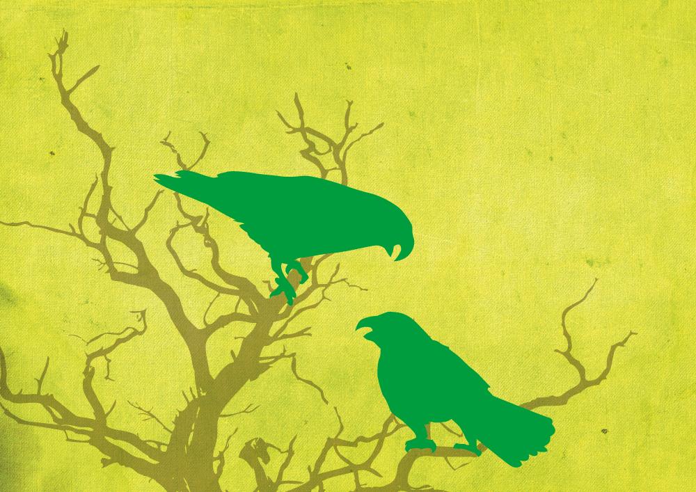 Matariki-Calendar-2012-Illustration_Kaka