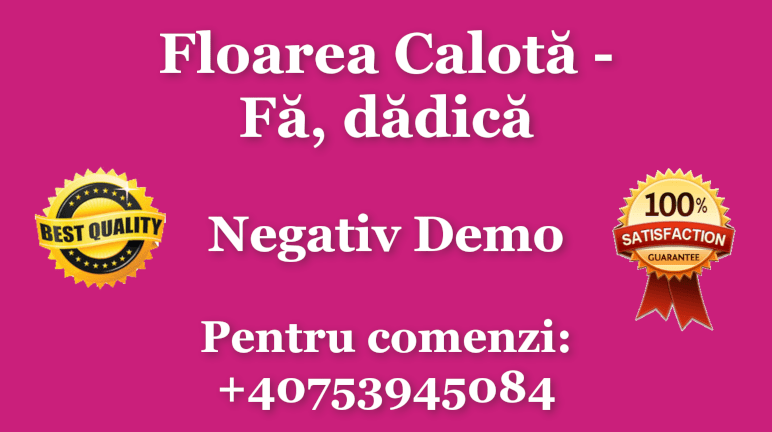 Fa, dadica – Floarea Calota Karaoke Instrumental Negativ by Gabriel Gheorghiu