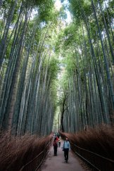 Arashiyama Bamboo I