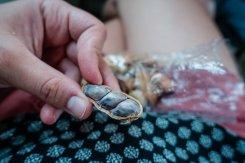 Schon mal frische Erdnüsse probiert?