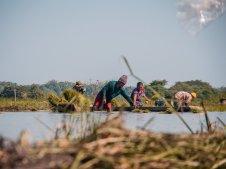 Reispflanzer II