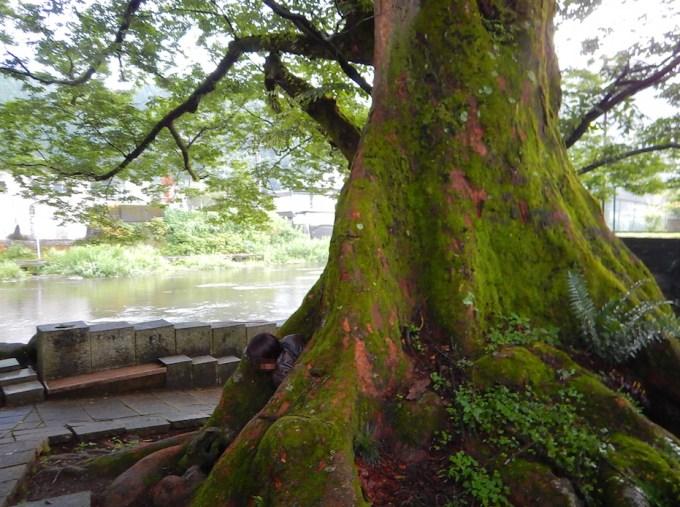 樹齢1000年の大けやきの中に入れます