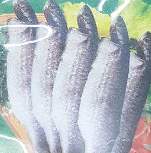 Bata-maach