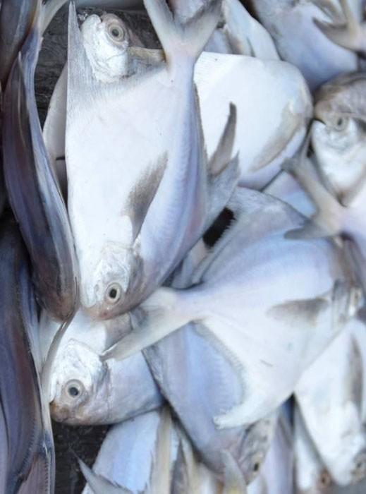 Silver Pomfret Fish, Fisch, Silver Butterfisch, Rupchada Maach, রূপচাঁদা মাছ, Tukwila-ZaZu Online Grocery Store In Germany