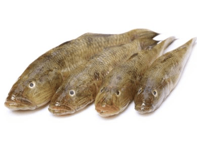 Bele Sandy Goby fish, tukwila online market in Germany