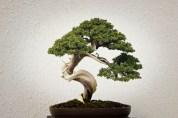 Photo: Bonsai Gardens, William Neuheisel via Creative Commons License.*