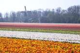 When will the flower fields be blooming