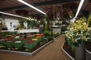 Flower show Drieban Flora Venhuizen
