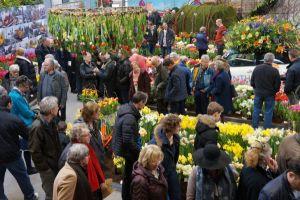 flower show Lenteflora Lisse