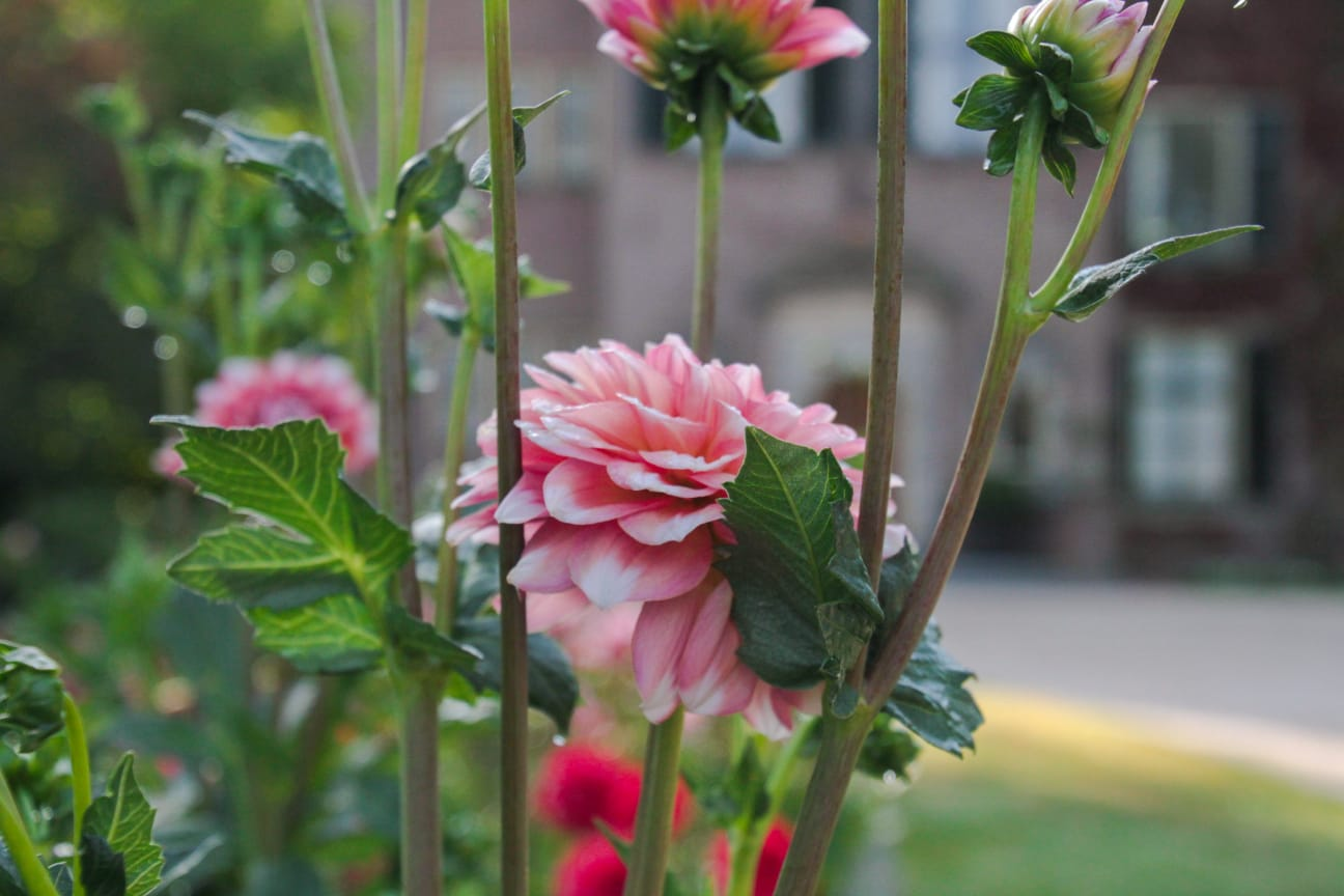 Summer flowers at Keukenhof Castle Gardens