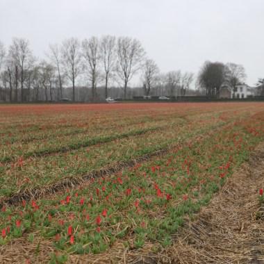Flower Fields March 14 2019