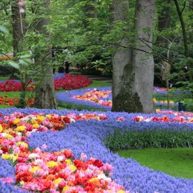 Keukenhof Spring Garden 1 May 2019