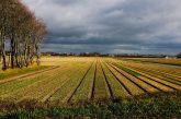 Tulip fields Holland 18 march 2021