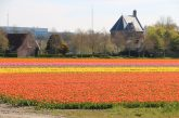 Flowers Holland