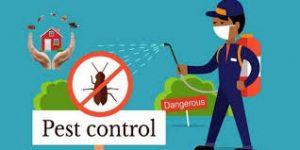 شركة مكافحة حشرات بالعين