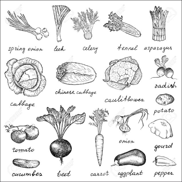 vegetables. hand drawing set of vector sketches