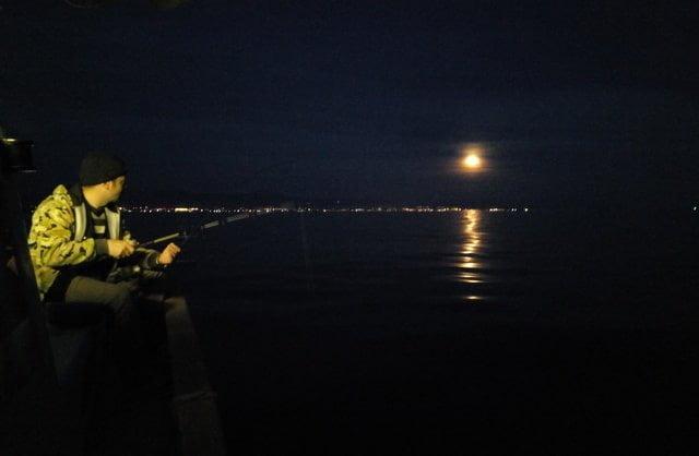 Dolunay Gece Avı