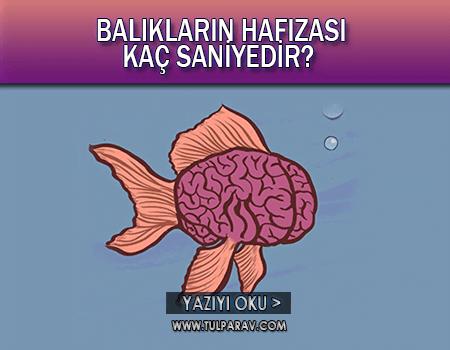 Balıkların Hafızası Kaç Saniyedir?