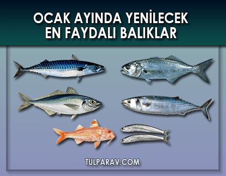 Ocak Ayında Hangi Balıklar Yenir