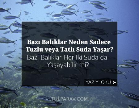 Bazı Balıklar Neden Sadece Tuzlu veya Tatlı Suda Yaşar? Bazı Balıklar Her İki Suda da Yaşayabilir mi?