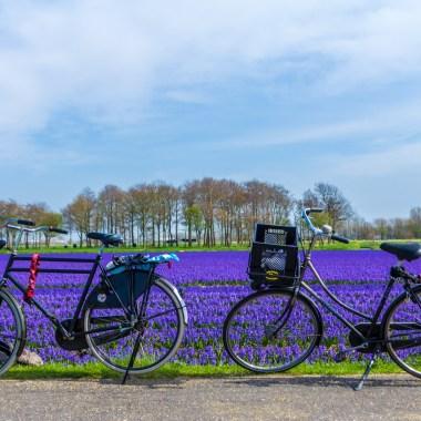 Geführte Radtour Tulpenfelder
