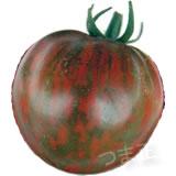 ブラックゼブラトマト