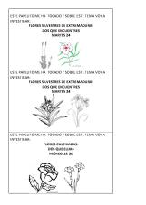 Temas para investigar sobre flores y mariposas_Página_4