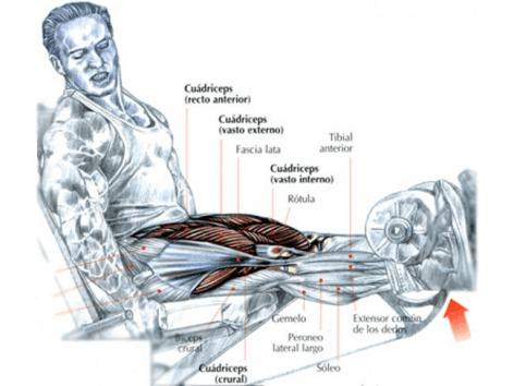 extensión de piernas con máquina