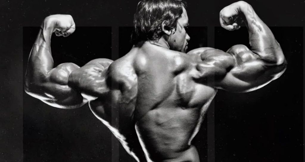 entrenamiento espalda arnold