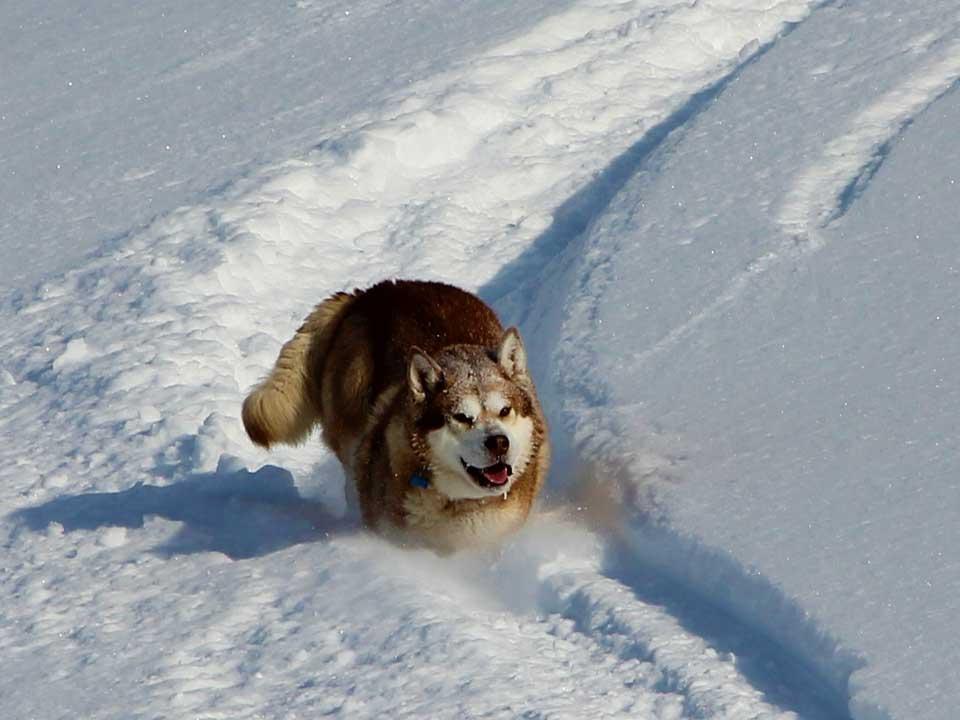 backcountry-skiing-03