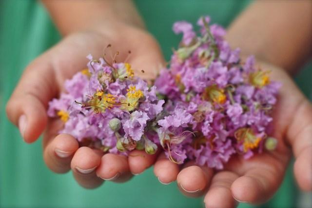 Tuned In Parents - summer activities for kids, gardening