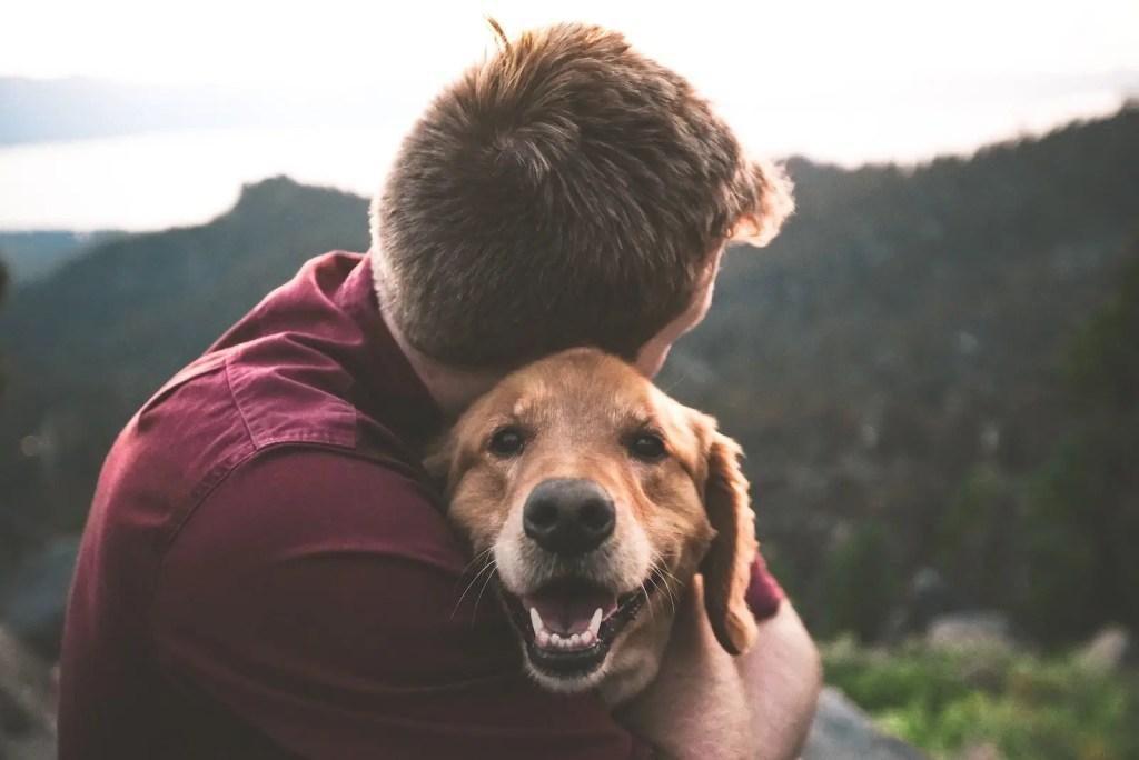 Pets, Dog, animal