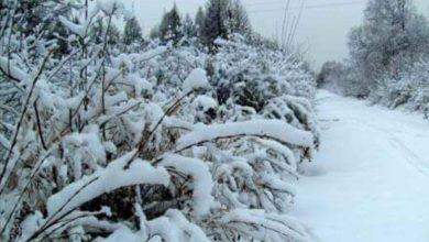 Photo of مؤشرات قوية على تساقط الثلوج