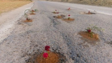 Photo of صورة اليوم: احتجاجات بغرس الورود وسط الطريق