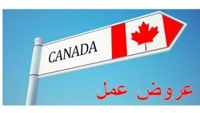 Photo of حرمان أكثر من 700 ألف شاب من فرصة عمل في كندا…وهذه التفاصيل
