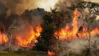 Photo of القصرين : نشوب حريق في منطقة المعربقة الجبلية