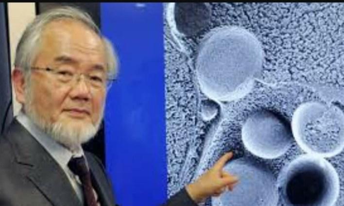 إزالة الخلايا السرطانية وخلايا الشيخوخة والزهايمر