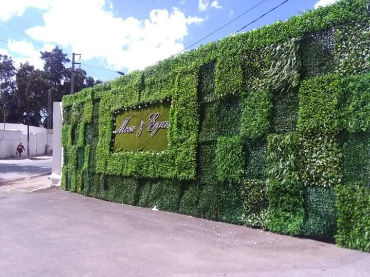 tunisie mur vegetal