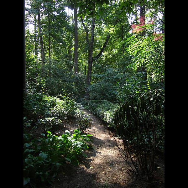 Rear path and planting at a north Atlanta residence in Buckhead, landscape designed by Tunnell and Tunnell Landscape Architecture.