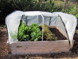 Homegrown Double Height Bed
