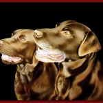 Harry & Cherry, Chocolate Labradors - Oil on Canvas