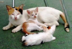 Gata criando sus gatitos. Foto Marisela Valero