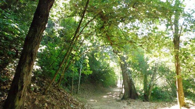 Parque Nacional Waraira Repano, (El Avila), foto Marisela Valero