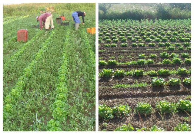 Cultivos orgánicos, foto cortesia http://es.paperblog.com/