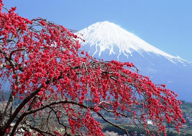 Monte Fuji, hermoso paisaje que hay que cuidar