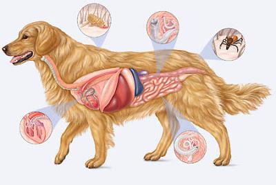 Principales parásitos en los perros