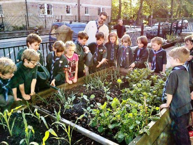 Los boy scouts y todas las escuelas de la zona participan en el proyecto