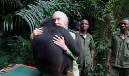 Jane Goodall es abrazada emotivamente por la chimpance liberada