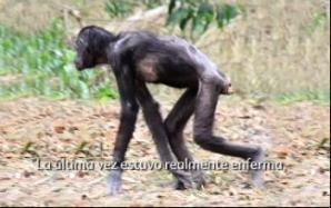 Wounda mortalmente enferma fue rescatada