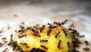 Insectos limpian la basura